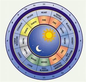 I like this circadian rhythm chart a lot too. | Chinese ...