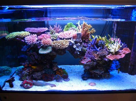 minimini s zeovit tank in japan news reef builders the reef and marine aquarium