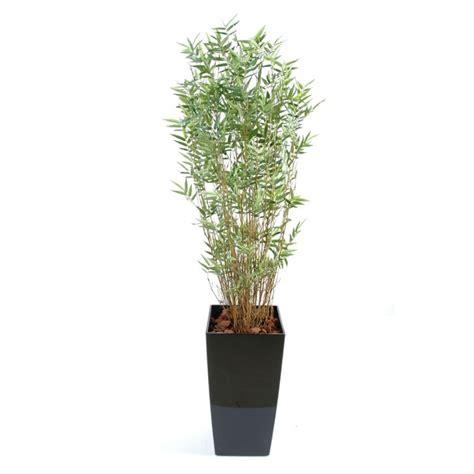 bambou semi naturel en pot kubis elementvegetal grossiste en plantes