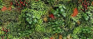 Sichtschutz Pflanzen Blühend : immergr ne pflanzen bersicht liste und pflegehinweise ~ Markanthonyermac.com Haus und Dekorationen