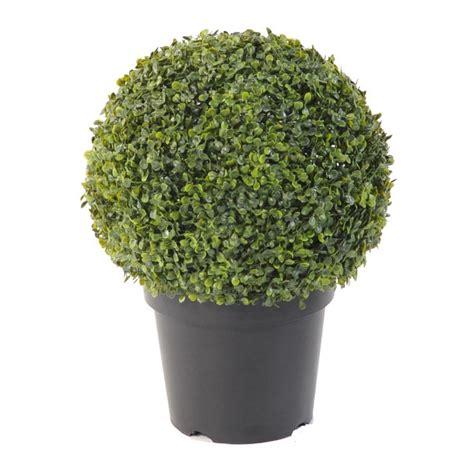 buis boule en pot 60 28 images buis boule de 60 cm de diam 232 tre muscari planter