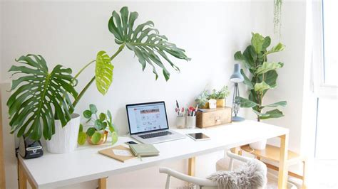 Why Is It Good To Decorate The Office With Plants? 3