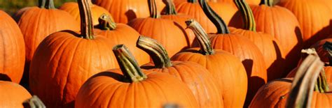 Pumpkin Patch Rochester New York by Pumpkin Patches In The Rochester Ny Area Kids Out And
