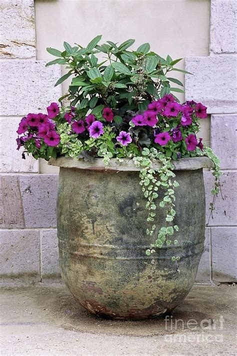25 best ideas about large pots on large plant pots large planters and large flower