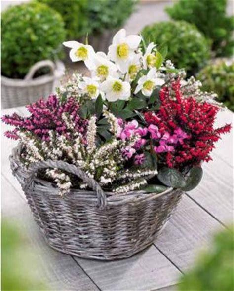 de jardinage pourquoi pas un jardin fleuri pendant l hiver