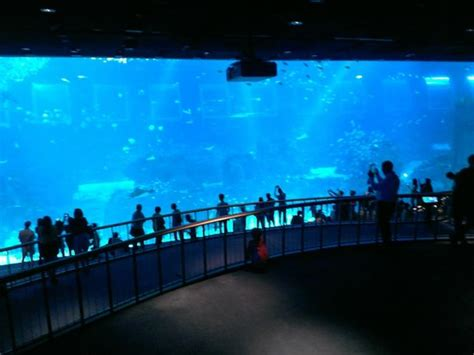 s e a aquarium picture of s e a aquarium sentosa island tripadvisor