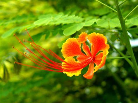 Fonds D'écran Fleurs Magnifiques Maximumwall