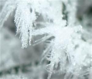 Was Wiegt Schnee : wei e pracht zwischen wissenschaft und m rchen schnee ~ Whattoseeinmadrid.com Haus und Dekorationen