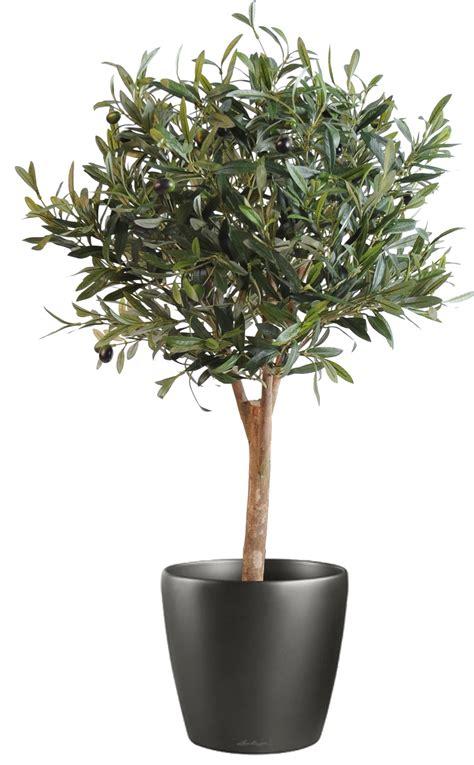 pot pour olivier 28 images olivier cache pot olive plantes et jardins faux olivier