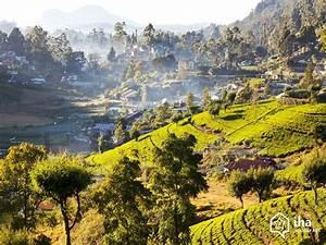 Sri Lanka Immobilien : arrendamento sri lanka num bungalow para suas f rias com iha ~ Markanthonyermac.com Haus und Dekorationen
