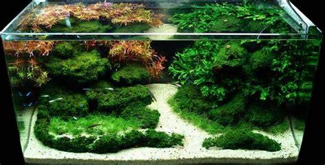 aquascape designs aquascape design quot sparkling oasis quot aquascapes design oasis