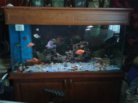 beautiful fish tank for sale bristol bristol pets4homes