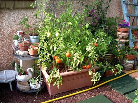 cultivons des tomates en pots jo tourtit