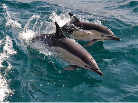 Zodiac Boat Maui by Maui To Lanai Dolphin Ocean Rafting Snorkel Adventure