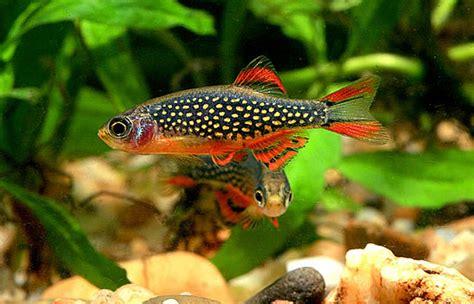 poissons exotiques vente magasin uniquement nano aquarium poissons pour petit aquarium