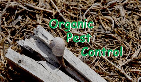 Organic Pest Control  The Petite Prepper