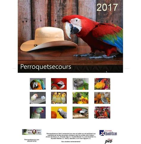 perroquetsecours calendrier mural grand format 2017 only