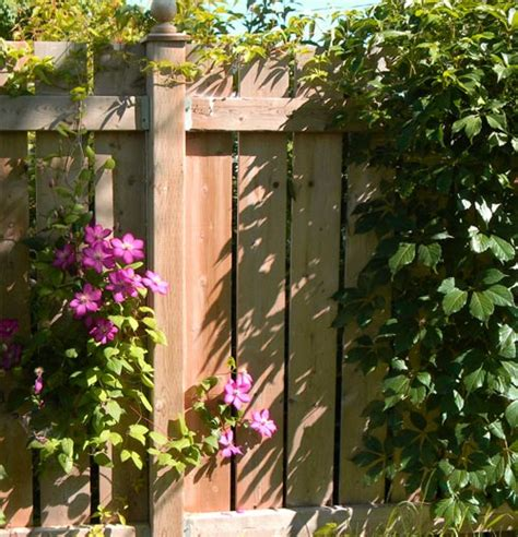 3 Ways To Give Your Garden Fence A Brand New Look Uk