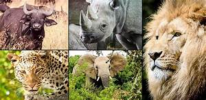 The Big Five - Experiences - Tailor Made Africa