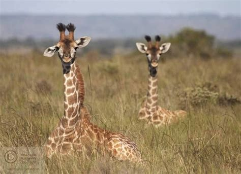 12 Adorable Baby Animals In South Africa  Africa Geographic