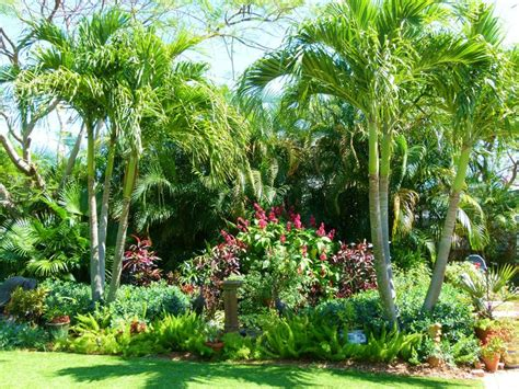Scarlet Red Cloak Flanked By Adondia Palms In Our Fountain