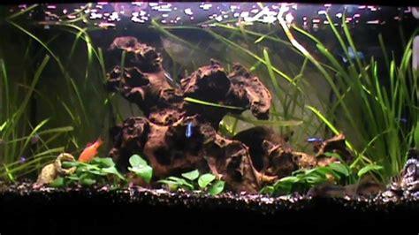 aquarium d eau douce