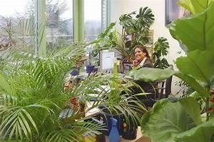 Große Zimmerpflanzen Pflegeleicht : gro e zimmerpflanzen pflegeleicht tolle grosse zamioculcas pflegeleicht in eggenwil kaufen ~ Markanthonyermac.com Haus und Dekorationen
