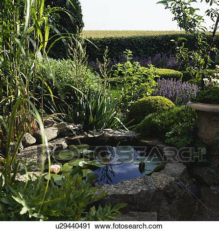 Stock Photography Of Waterlilies On Small Raised Pond In