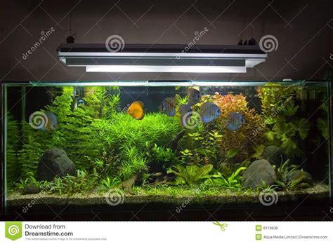 aquarium d eau douce tropical photos libres de droits image 6119838