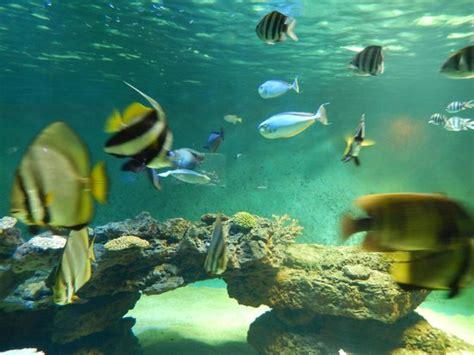 aquarium talmont picture of aquarium le 7eme continent talmont hilaire tripadvisor