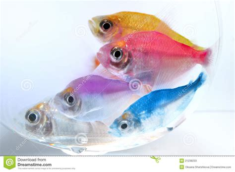 poissons d aquarium photos stock image 21238233
