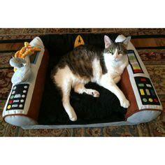 1000 images about cats wif trek or trek cats