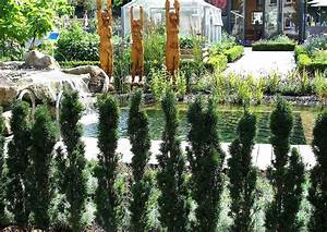 Welche Pflanzen Als Sichtschutz : schmale hecke mit wenig wurzeln und platzverbrauch ~ Markanthonyermac.com Haus und Dekorationen