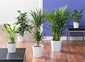 Pflanzen Für Wohnzimmer : pflanzen wohnzimmer raum und m beldesign inspiration ~ Markanthonyermac.com Haus und Dekorationen