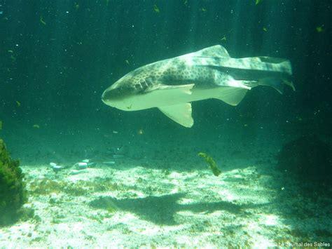 171 les hommes de l ombre 187 de l aquarium du 7e continent actu fr