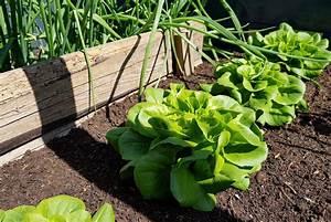 Garten Im Mai : der garten im mai gr neliebe ~ Markanthonyermac.com Haus und Dekorationen