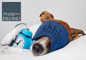 In Welche Himmelsrichtung Schlafen : schlafen tiere wie wir ~ Markanthonyermac.com Haus und Dekorationen