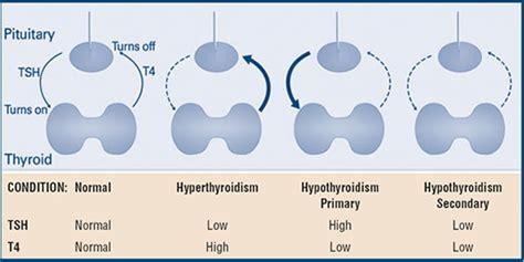 thyroid function tests american thyroid association