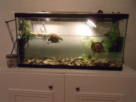 d 233 coration aquarium tortue
