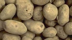 Kartoffeln Und Zwiebeln Lagern : kartoffeln richtig ernten und lagern ~ Markanthonyermac.com Haus und Dekorationen