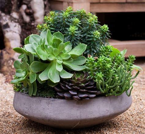 Succulent Dish Garden By Mobile Landscapes Gardening
