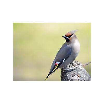 Top 10 Most Beautiful Birds In The WorldMill Door Makes