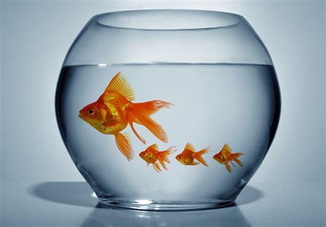poisson dans un aquarium 28 images am 233 nagement 80l pour poisson japonais aquarium pin