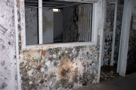 How To Detect Household Mould Repair Dent In Laminate Floor Narrow Flooring Staggered Pattern For Best Wood Dark Brown Paste Versus