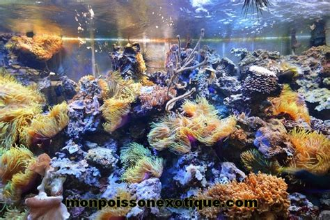 exemples d aquariums monpoissonexotique monpoissonexotique aquariophilie poissons