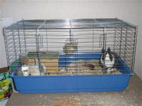 une cage pour lapin nain tout ur le lapin nain