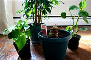 Feng Shui Pflanzen Reichtum : feng shui zimmerpflanzen everyday feng shui ~ Markanthonyermac.com Haus und Dekorationen