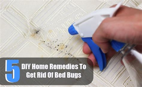 5 Diy Home Remedies To Get Rid Of Bed Bugs Bi Fold Integral Blinds Chair Hunting Are All Mice Blind Cave Fish Facts 2 Go Instructions Sudden Blindness In Dogs Diy Ground What Colors Can T You See When Re Colorblind