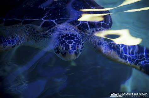 visite 224 l aquarium de vannes dans le morbihan didier da silva photographie