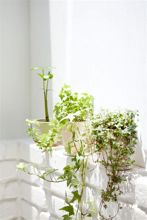 Ultimate Guide To Climbing Plants  Greener On The Inside